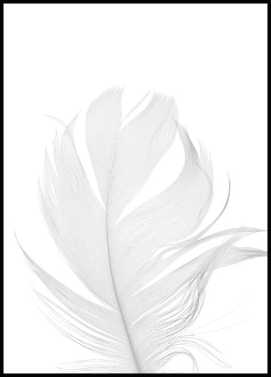 White feather in a black wooden frame