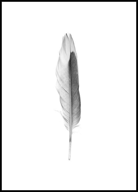 Feather poster delicate in black wooden frame