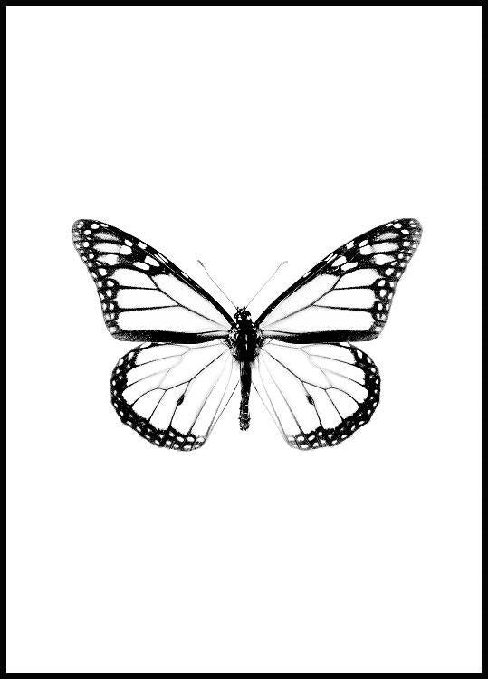 Butterfly poster black and white in black wooden frame