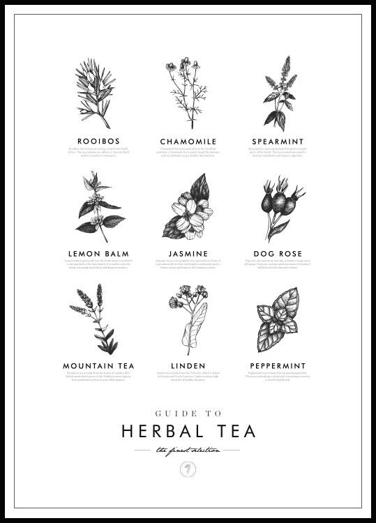 Herbal tea poster in black wooden frame