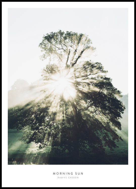 morning sun through the branches, nature print