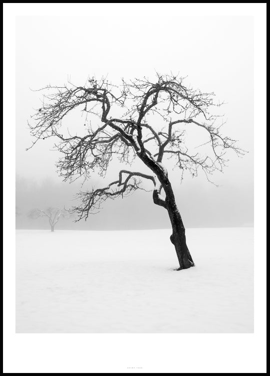 tree poster, snowy fields