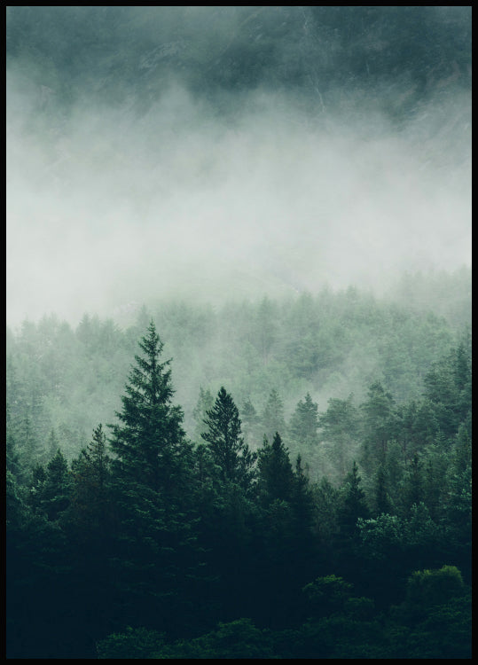 tree tops poster, dark foggy forest