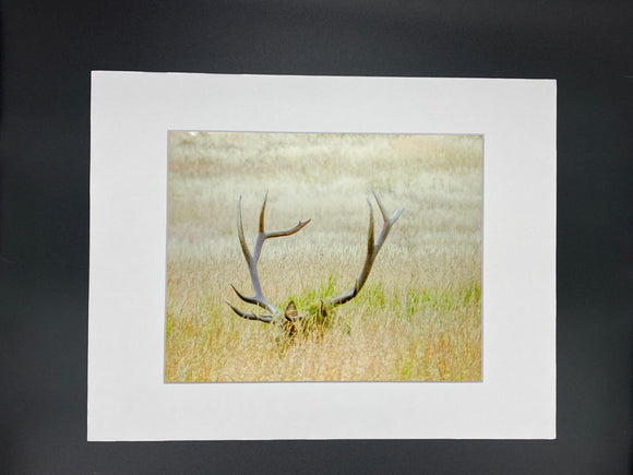 Hidden Elk photo print- 11x14
