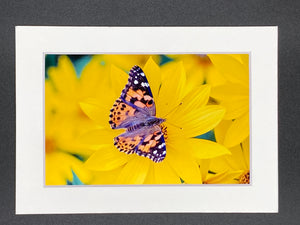 """Painted Lady Butterfly"" 5x7 print"