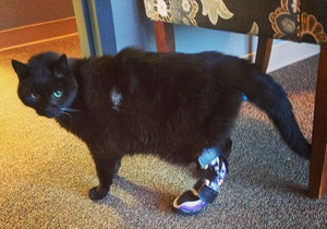 Custom Cat Tarsal Brace | Cat Rear Leg Brace
