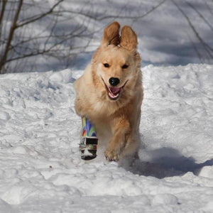 Dog Prosthetic Device