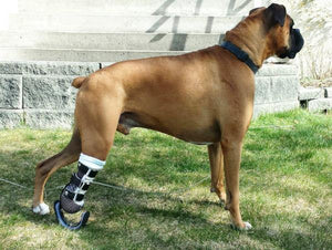 Dog Leg Prosthetic - Partial Limb