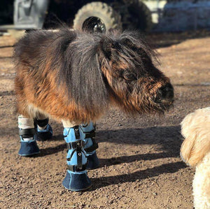 Custom Pony Leg Brace for Angular Deformity | Animal Ortho Care