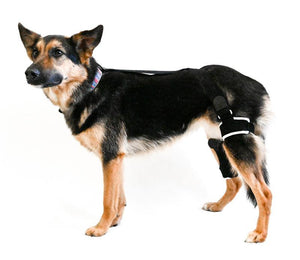EMbrace Knee Support - Animal Ortho Care