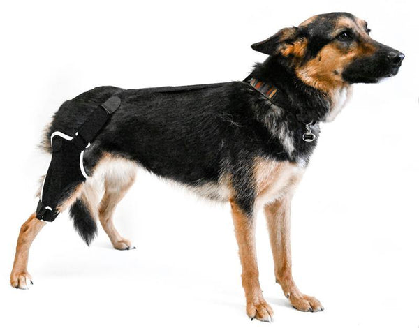 knee support for dogs with arthritis