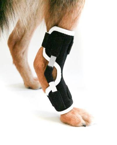 EMbrace Hock Support - Animal Ortho Care