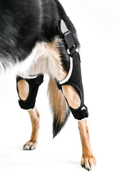 EMbrace Dog Knee Support | Orthopedic