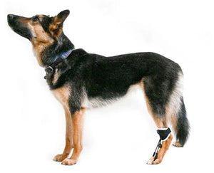 EMbrace Toe-Up Support - Animal Ortho Care