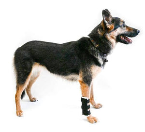 Dog Carpal Brace