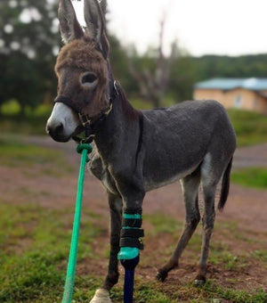 Donkey Mule Custom Leg Prosthetic | Front Leg | Animal Ortho Care