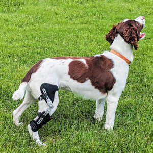 Performance Dog Knee Brace | CCL-ACL Stifle | Dog Rear Leg Brace