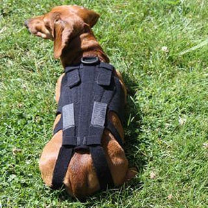 L'il Back Bracer Dog Back Brace - Custom