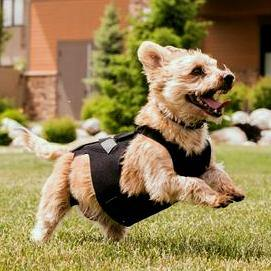 L'il Back Bracer Dog Back Brace - Animal Ortho Care