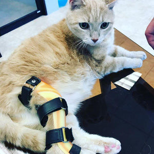 Custom Cat Leg Brace - Stifle | Carpal | Tarsal