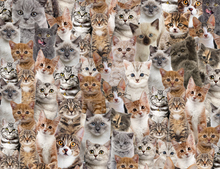 Load image into Gallery viewer, Kitten Gift Wrapping Paper