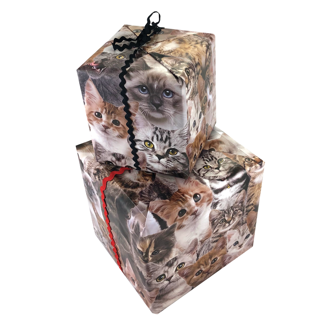 Kitten Gift Wrapping Paper