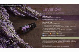 Lavender - Satori Art Decor