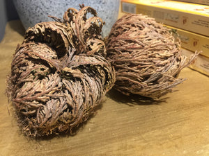 Rose of Jericho - Satori Art Decor