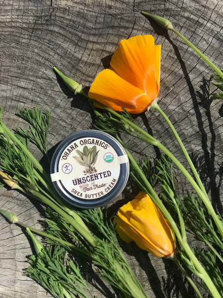 Organic Shea Butter Cream - Unscented - Case