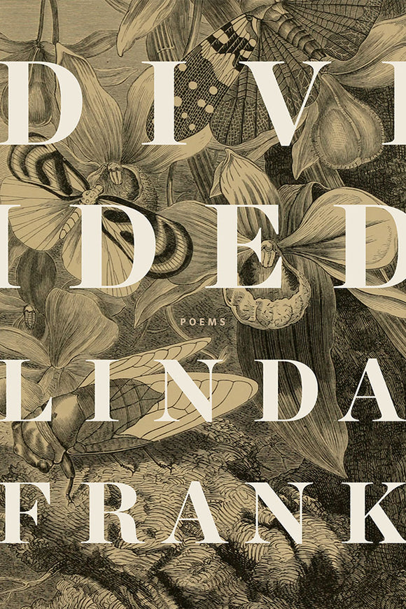 Book Cover: Divided, Linda Frank