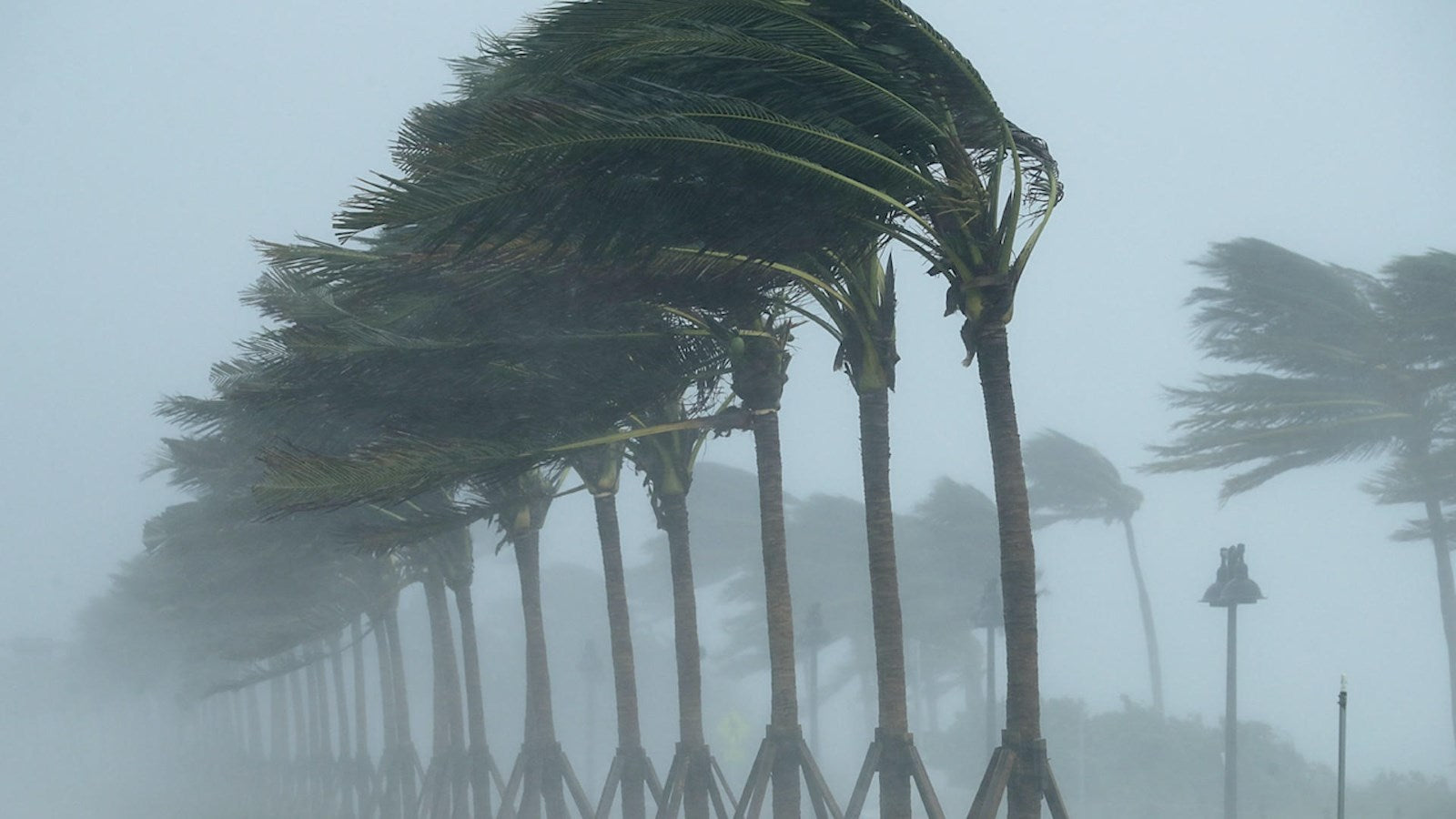 Florida Storm Pal Trees in High Wind