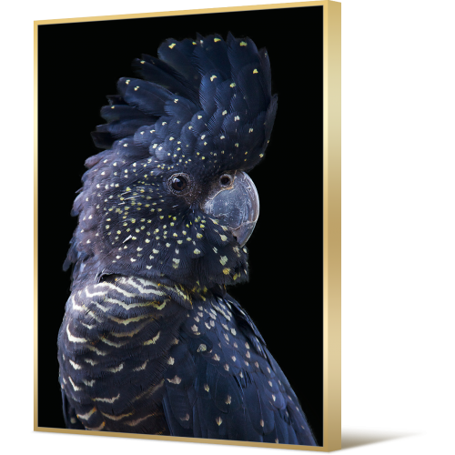Premium Edition Blue Spotted Cockatoo