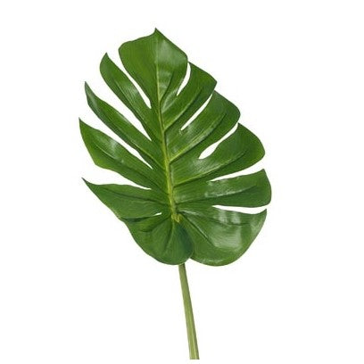 MONSTERA LEAF GREEN
