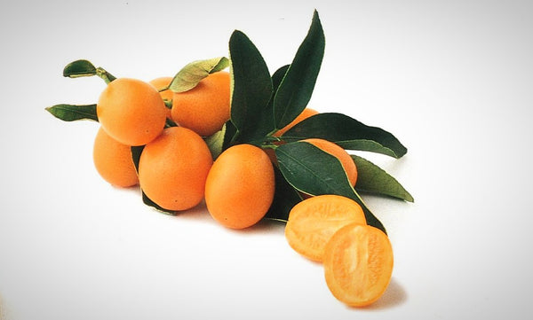 Meiwa Semi-Dwarf Kumquat Tree