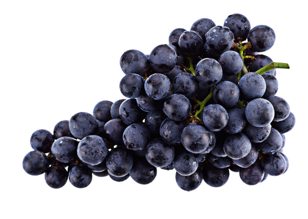 Black Monukka Seedless Grape Vine