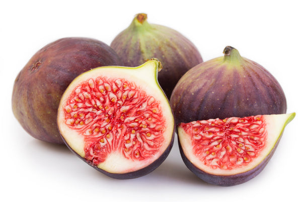 Chicago Hardy Fig Tree (SOLD OUT)