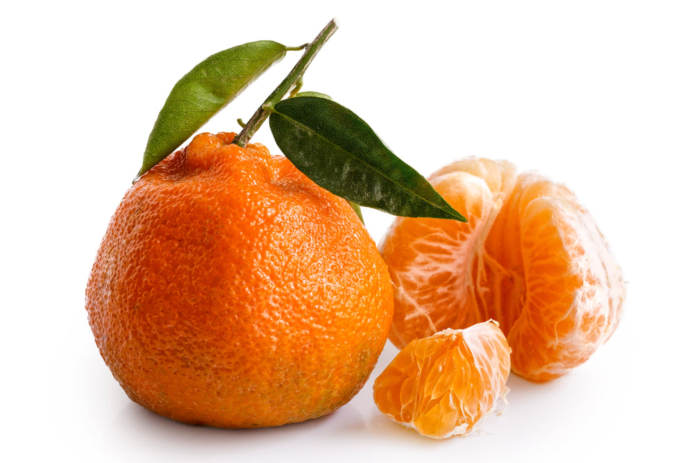 Arizona Lemon Law >> Owari Satsuma Semi-Dwarf Mandarin Tree For Sale – Four Winds Growers