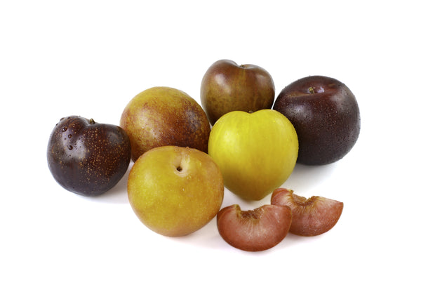 Pluot- Multi Budded Fruit Tree-(SOLD OUT)