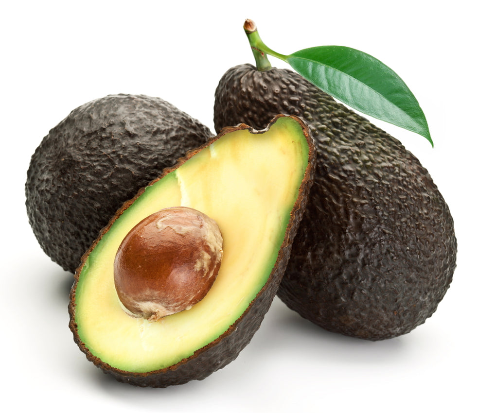 Hass Avocado Tree – Four Winds Growers