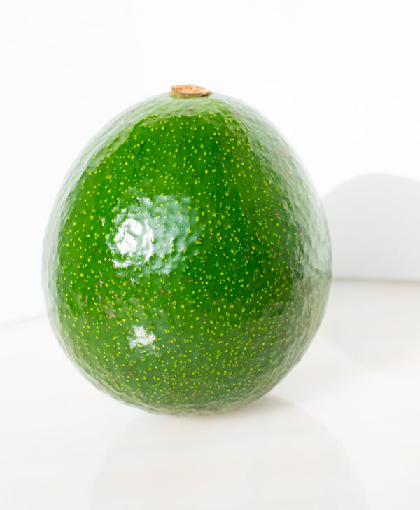 Reed Avocado Tree (SOLD OUT)