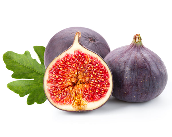 Purple Smyrna Fig Tree