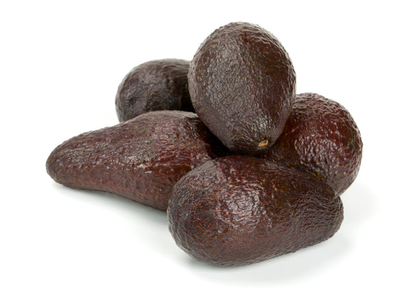 Mexicola Grande Avocado Tree (SOLD OUT)