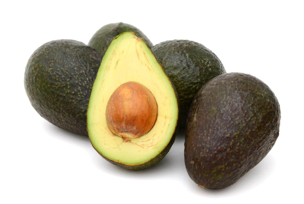 Sir Prize Avocado Tree Four Winds Growers