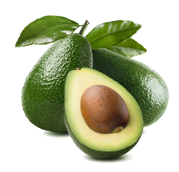 Zutano Avocado Tree