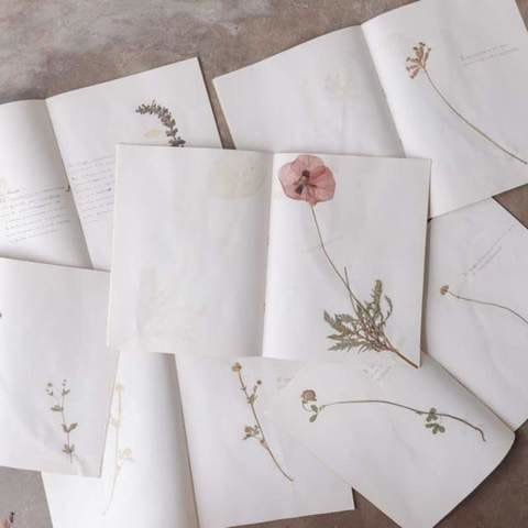 Design Trend We're Crushing On | Pressed Flowers