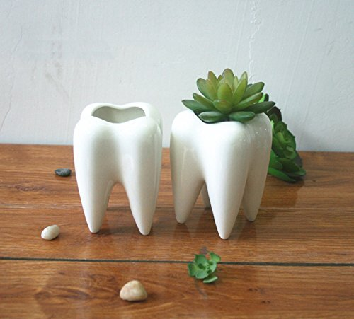 Dental Teeth Pots for Plants