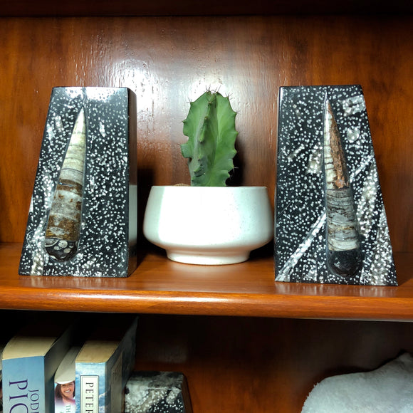 Orthoceras Fossil Bookends, Black