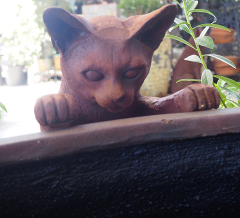 Peeping Cat Rust