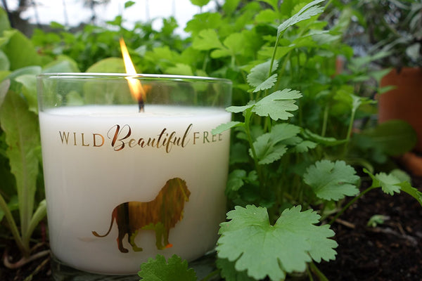 Wild Beautiful Free Organic Coconut Wax Candle - Hope