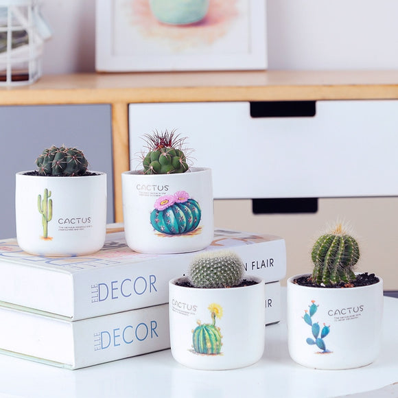 Cactus Design Flowerpot with Bamboo Stand